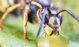 Abeja, intercambio, miel, flor del fondo salvaje Imagenes de archivo