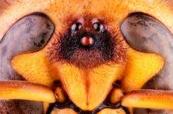 Abeja, intercambio, miel, insectos de la flor del fondo Fotografía de archivo libre de regalías