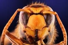 Abeja, intercambio, miel, insectos de la flor del fondo Imagenes de archivo
