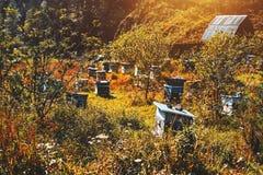 Abeja-jardín con múltiplo Imagen de archivo libre de regalías