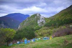 Abeja-jardín de la montaña Foto de archivo libre de regalías