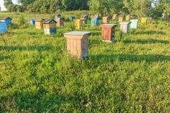 Abeja-jardín del verano con varias colmenas Imagen de archivo libre de regalías