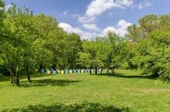 Abeja-jardín en el claro del bosque Imágenes de archivo libres de regalías