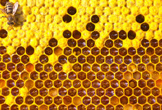 Abeja, miel, néctar y polen Imagen de archivo libre de regalías