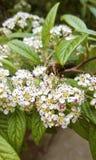 abeja minúscula Foto de archivo