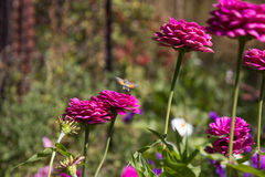 ¿Abeja o mariposa? Imagen de archivo libre de regalías