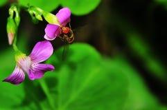Abeja o mosca Imágenes de archivo libres de regalías