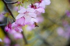 Abeja ocupada el la primavera Imagen de archivo