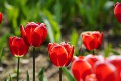 Abeja ocupada el la primavera Imágenes de archivo libres de regalías
