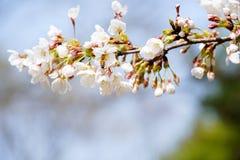 Abeja ocupada el la primavera Fotografía de archivo