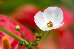 Abeja ocupada en la flor Imagen de archivo