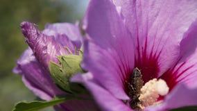 Abeja pollenating Fotografía de archivo
