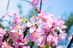 Abeja que chupa el polen Fotografía de archivo libre de regalías