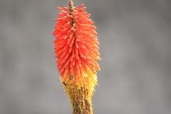 Abeja que consigue el néctar Imagen de archivo libre de regalías