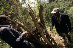 Abeja que cultiva en Uganda Foto de archivo libre de regalías