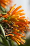 Abeja que oculta en una planta que sube anaranjada Fotografía de archivo