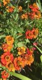 Abeja que recoge el néctar Imagen de archivo libre de regalías