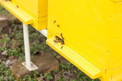 Abeja que recoge el néctar y el polen de una flor y que se traslada a Foto de archivo libre de regalías