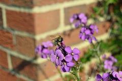 Abeja que toma el polen de una flor Foto de archivo
