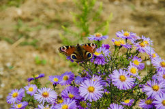 Abeja que vuela sobre campo de flor colorido en el verano Foto de archivo