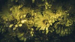 Abeja solitaria en las flores amarillas Foto de archivo