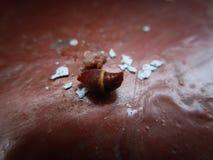 Abeja venenosa de la picadura del primer de la picadura de la avispa Imagen de archivo