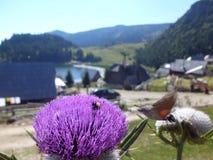 Abeja y abejorro en una flor salvaje Foto de archivo libre de regalías