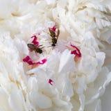 Abeja y avispa salvajes Fotografía de archivo libre de regalías