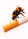 Abeja y cigarrillo Imagen de archivo