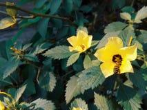 Abeja y flor 2 Fotografía de archivo libre de regalías