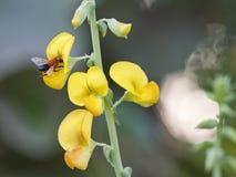 Abeja y flor. Imagen de archivo