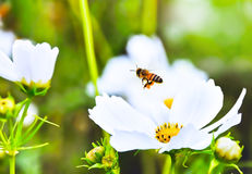 Abeja y flor fotografía de archivo