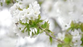 Abeja y flor almacen de video