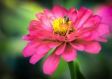 Abeja y flor Fotografía de archivo libre de regalías