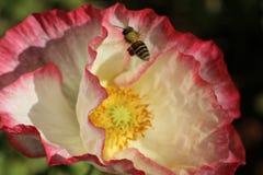 Abeja y flor Foto de archivo