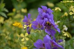 Abeja y flor alegre de la abeja Foto de archivo libre de regalías