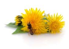 Abeja y flor amarilla Fotografía de archivo