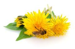 Abeja y flor amarilla Imagenes de archivo