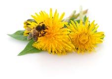 Abeja y flor amarilla Foto de archivo
