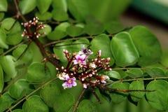 Abeja y flor con adentro un jardín verde Imágenes de archivo libres de regalías