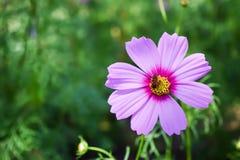 Abeja y flor en el jardín Imágenes de archivo libres de regalías