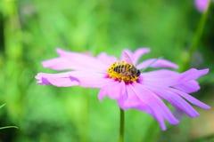 Abeja y flor en el jardín Imagen de archivo
