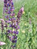Abeja y flor salvaje en la tierra Imagen de archivo