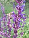 Abeja y flor salvaje en la tierra Imagenes de archivo