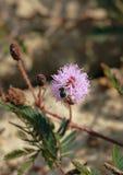 Abeja y flor seca Imágenes de archivo libres de regalías