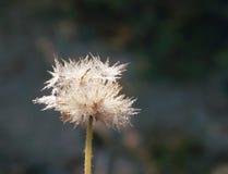 Abeja y flor seca Imagenes de archivo