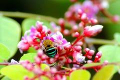 Abeja y flores Imagenes de archivo