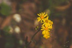 Abeja y flores en proceso de la polinización Foto de archivo libre de regalías