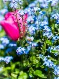 Abeja y flores en tiempo de primavera Imagen de archivo