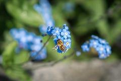 Abeja y flores en tiempo de primavera Imágenes de archivo libres de regalías